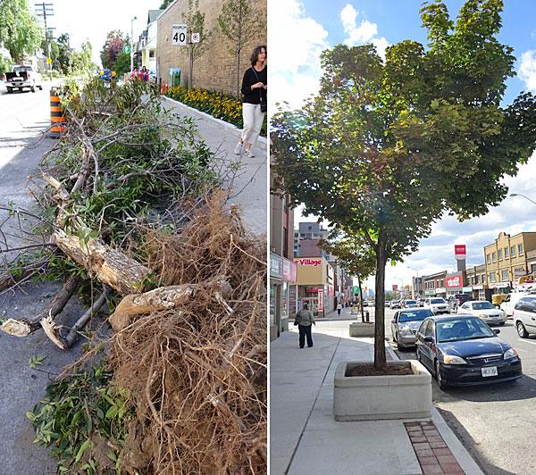 tree-trashing